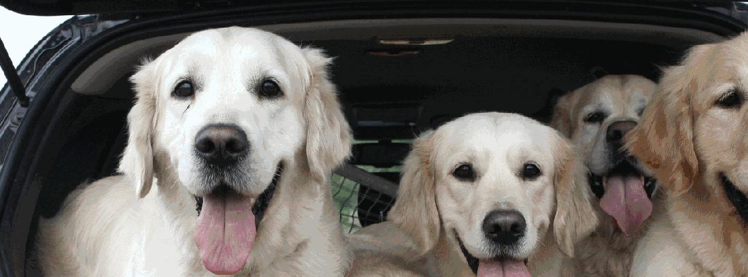 Hund im Auto - was ist zu beachten?